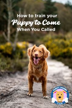 How to train your puppy to come come when called with his name. When your outside, it's very easy for your puppy to get distracted so here's how you can train it to come back to you every time.