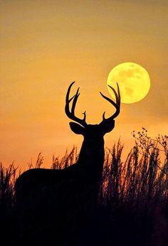Good night. Happy weekend.. - Zehra Maltepe - Google+