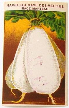 French Vegetable Seed Label, Navet Ou Rave Des Vertus