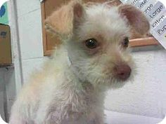 Pasadena, TX Facts about KEVIN     Breed: Fox Terrier (Wirehaired) Mix     Color: cream/gold     Age: Puppy     Size: Small 25 lbs (11 kg) or less   ...