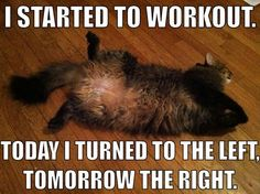 Cat workout