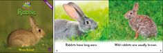 Rabbit—by Nicole Boswell Series: Zoozoo Animal World GR Level: D Genre: Informational