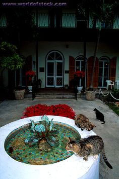 Kitties and patio fountain at the Ernest Hemingway Home in Key West, Florida