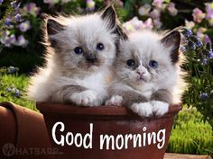Cute Pictures of Cats - Kittens And Cats Meowing - Cute Kittens Videos Cute Kitten Gif, Kittens Cutest, Cute Cats, Good Morning Cat, Good Morning Images, Morning Pics, Morning Quotes, Fluffy Kittens, Cats And Kittens