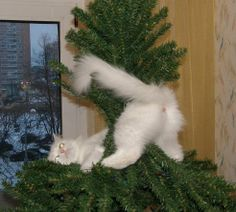 Snowу decorated tree as he could