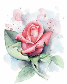 Fresh Rose by Emily-Luella on DeviantArt