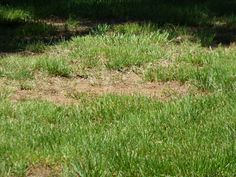 Brown Lawn Care: Reasons For Dying Grass And How To Treat - If you're wondering about reasons for dying grass and how to revive a dead lawn, there are numerous causes and no easy answers. The first step to brown lawn care is figuring out why it's happenin