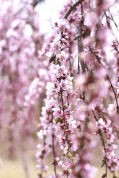 Garden Trees, Vines, Flora, Gardens, Leaves, Rooms, Plants, Bedrooms, Outdoor Gardens