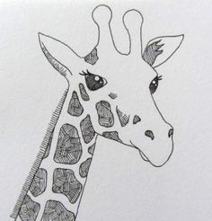 Line drawing of a giraffe by Clare Willcocks