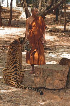 Monk & his tiger
