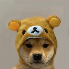 Funny Animal Memes, Funny Dogs, Funny Animals, Cute Animals, Shiba Inu, Cat And Dog Memes, Dog Icon, X Picture, Animal Wallpaper