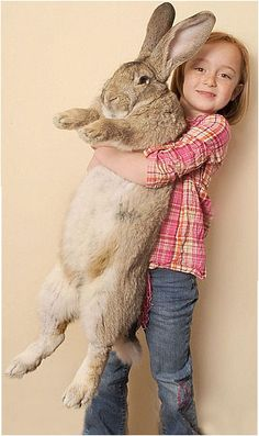 Darius, the world's largest rabbit.  Darius is 4 feet, 3 inches and weighs in at 50 pounds.