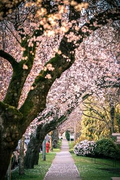 Visit Vancouver in April for the Cherry Blossom Festival. There are more than 40,000 Japanese cherry flowering trees around this British Columbia city, making it a beautiful spring destination.