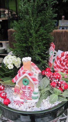Christmas fairy garden #Christmas #fairygarden