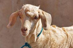 Roadtrip, Animals, Travel Report, Animales, Animaux, Animal, Animais, Dieren
