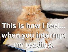 amantes de los libros entienden interrumpir