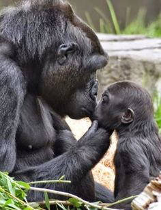 ✔ Baby Animals And Their Mothers Beautiful Creatures Cute Funny Animals, Cute Baby Animals, Nature Animals, Animals And Pets, Strange Animals, Animals With Their Babies, Wild Animals, Beautiful Creatures, Animals Beautiful