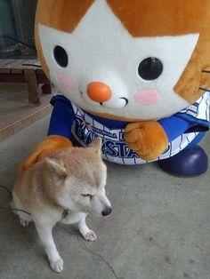 Shiba Inu and Japanese mascot