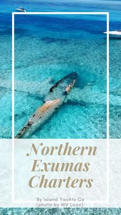 Enjoy a trip down to the Northern Exuma Cays, where crystal clear waters and white-sand beaches await! Travel Around The World, Around The Worlds, Turtle Sanctuary, Romantic Honeymoon Destinations, New Providence, Crystal Clear Water, White Sand Beach, That Way, Caribbean