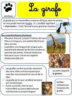 AFRIQUE - LECTURES DOCUMENTAIRES SUR LES ANIMAUX.