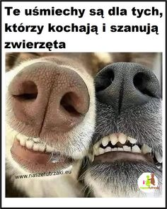 Humor, Animals, Animales, Animaux, Humour, Funny Photos, Animal, Animais, Funny Humor