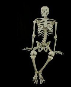 budget bucky full skeleton halloween prop - Halloween Skeleton