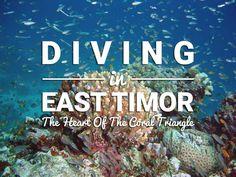 Corals in East Timor @michaelOXOXO @JonXOXOXO @emmaruthXOXO  #MAGICALTIMOR-LESTE