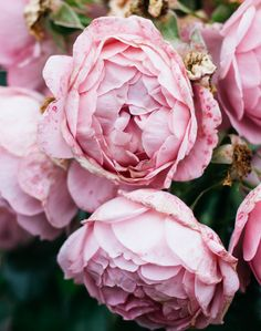 6 Things You Never Have To Prove To Anybody Else — From Roses