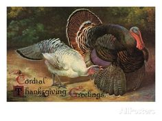 Postcard of Turkeys Giclee Print