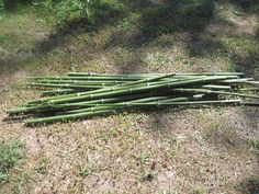 harvesting and curing bamboo for garden trellis or other projects - HOMEGROWN