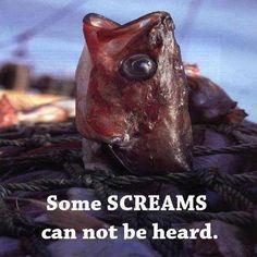 Some screams cannot be heard...  Go vegan Fish Tuna salmon