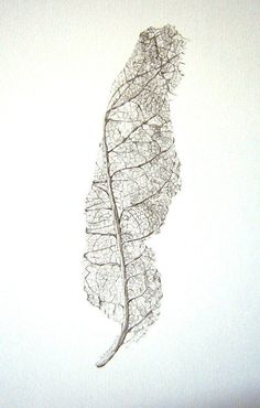 Art, Botanical, Winter, Natural History, Leaf Skeleton - Limited Edition Glicee Print from Original Drawing. $27.00, via Etsy.