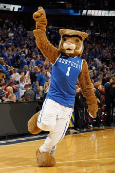 March Madness has some serious competition on the court, but nothing is more competitive than the mascots. A team's mascot can mean everything. Kentucky College Basketball, Kentucky Sports, Uk Basketball, University Of Kentucky, Kentucky Wildcats, Go Big Blue, My Old Kentucky Home, March Madness, Pets
