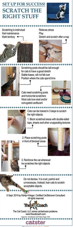 Got this from Catster! http://www.catster.com/lifestyle/cat-behavior-training-tips-scratching-post-furniture-sofa-carpet-scratcher
