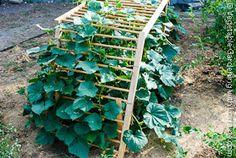 Wooden Arch Ladder Cucumber Trellis