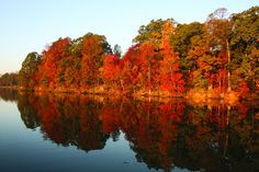 Fall colors Reflected fall colors on North Fork of Tred Avon River, near Easton MD. Chesapeake Bay,Choptank,tributary,season