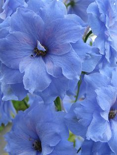 Bold and beautiful blooms! I am so drawn to blue and purple flowers.