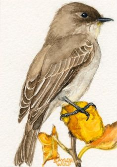 Eastern Phoebe  Art Print of Watercolor Bird Painting ACEO or 5x7