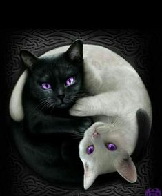 The balance between light and dark is symbolised here with two cuddly felines entwined together, their jewelled amethyst eyes shining brightly. Hey, everyone loves cats, right? Jumbo Fleece Blanket with Doube Sided Print is made of Polyester,. I Love Cats, Cute Cats, Funny Cats, Siamese Cats, Cats And Kittens, Photo Manga, Foto Fantasy, Dark Fantasy, Image Chat