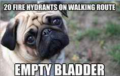 """The Best Of """"First-World Dog Problems"""" 