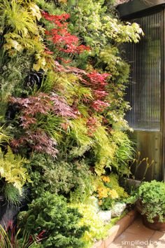 Live vertical plant wall with Japanese maples.  Just outside the kitchen sits a charming garden courtyard. Designed by Davis Dalbok of Living Green Design, the garden features seven original Japanese paintings and a stunning living vertical wall of cascading maples, conifers and mosses. It's a beautiful view from the kitchen's window. // San Francisco Decorator Showcase