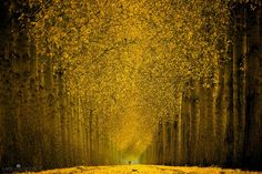 Today I have a amazing photography artists by the name of Lars van de Goor from the Netherlands. I Love Love Love his photo Tree Photography, Amazing Photography, Landscape Photography, Autumn Photography, Tree Hd Wallpaper, Nature Wallpaper, Leaves Wallpaper, Fall Wallpaper, Autumn Forest