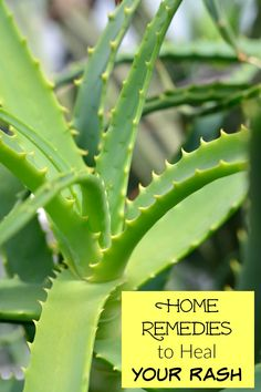 Home Remedies to Heal Your Rash - Beauty Awesome