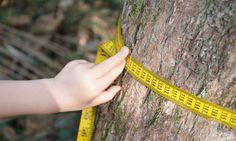 Fun ways to measure nature