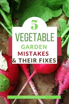 Learn the five vegetable garden mistakes beginner gardeners make plus how to fix them. #vegetablegarden #vegetablegardenharvesting #beginnergardeners