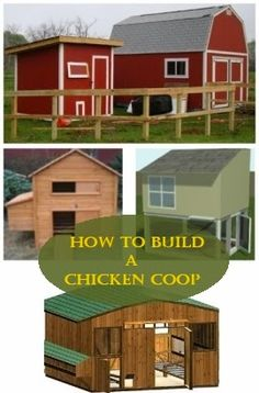 How To Build A Chicken Coop - Applying these quick and simple design tips and appending them to your chicken coop design, you will construct a chicken coop that is both gratifying to the eye, and healthy for your chickens.