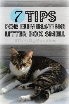 Tips eliminating litter box smell, 7 ways to cut cat box odor #catsdiylitterbox #catlitterboxtips