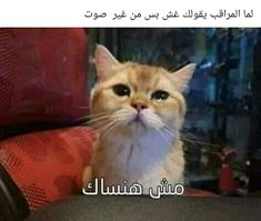 Funny Photo Memes, Funny Instagram Memes, Funny Picture Jokes, Funny Cat Memes, Funny Relatable Memes, Funny Comics, Funny Cats, Arabic Memes, Arabic Funny