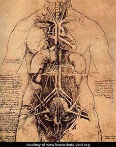Drawing Of A Womans Torso - Leonardo Da Vinci - www.leonardoda-vinci.org