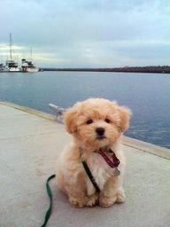 i love dogs. he is so cute.